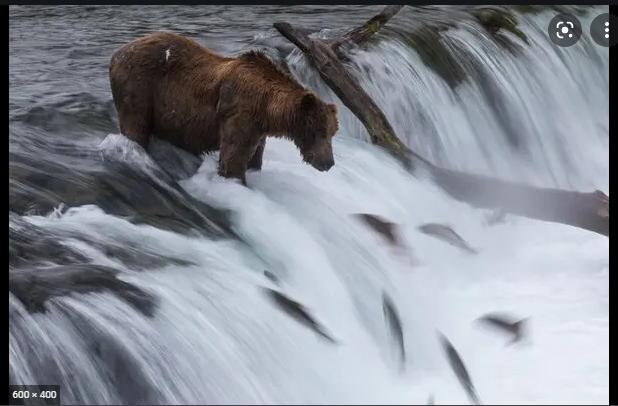 a1 - Biden Administration Moves to Protect Alaska's Bristol Bay